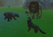 3D Hayvanlar Alemi Oyunu