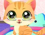Sevimli Kedi Bakımı
